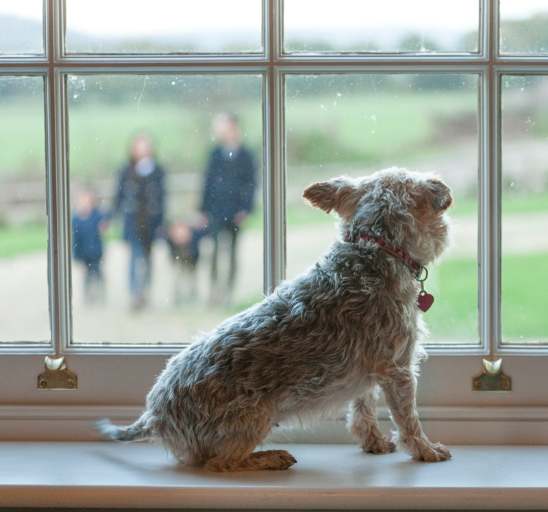 Small dog looking through a sash window